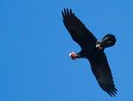 BirdTrek's photo